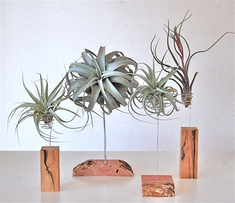 Metal Plant Stand by Sculptural Air Plants Flourish