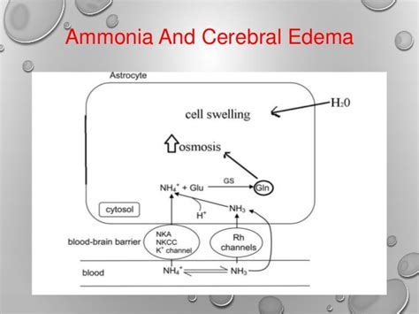 How To Detox Ammonia From Brain by Hepatic Encephalopathy Biochemical Basis