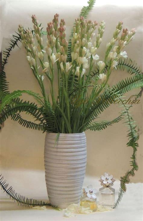 tuberosa fiore donna tra i fiori ugo pellecchia piante e fiori