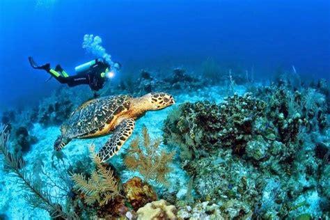 que veinte aos no ecuador celebra los veinte a 241 os de creaci 243 n de la reserva marina de gal 225 pagos el diario ecuador