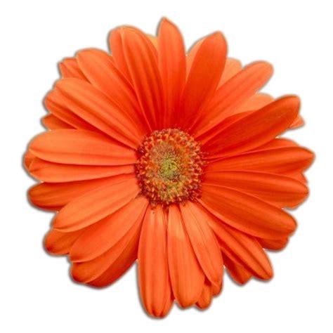 flower image flower power revitalize not militarize