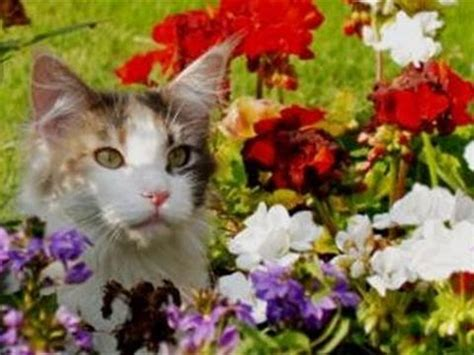 how to keep cats out of flower bed how to deter cats from your flower beds youtube