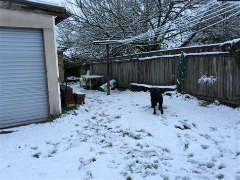 snow backyard the snow job and the murder suicide the squawkin galah