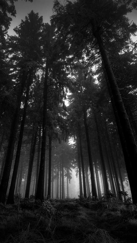 iphone wallpaper hd black and white black and white iphone wallpaper hd iphone wallpaper