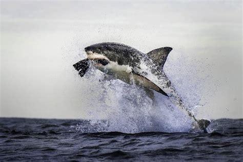 squalo volante una foto ci piace page 172
