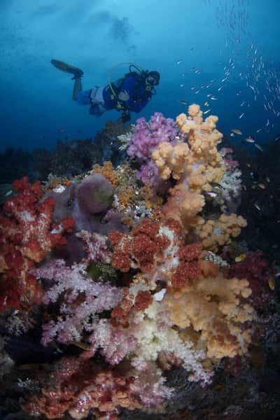 dive raja at liveaboard raja at liveaboard the best boats at the best prices