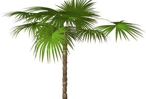 palm tree clip palm tree and free png flower clipart