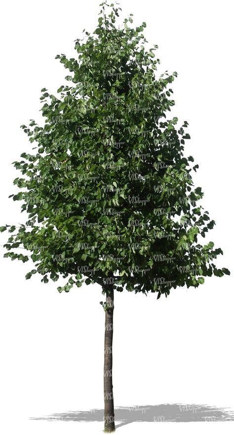 cut  trees  plants vishopper