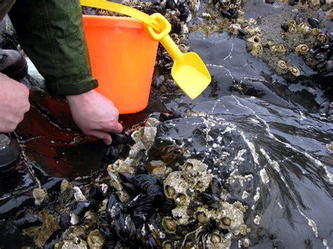 bi mart lincoln city oregon the garden of mussel gathering on the oregon coast