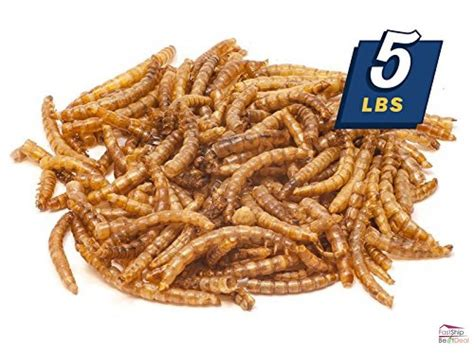 dried mealworms bulk treats chickens wild birds reptiles 5