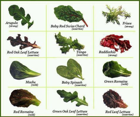 types of lettuce lettuce varieties food charts salads and green
