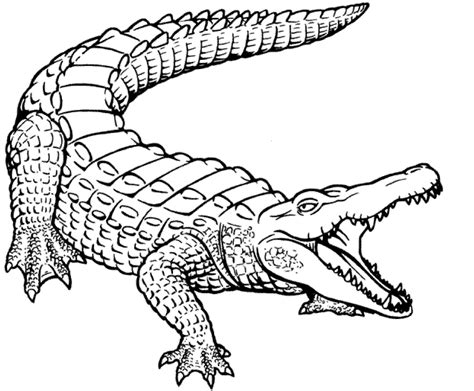 Coloring Sheet Of Alligator | free printable crocodile coloring pages for kids