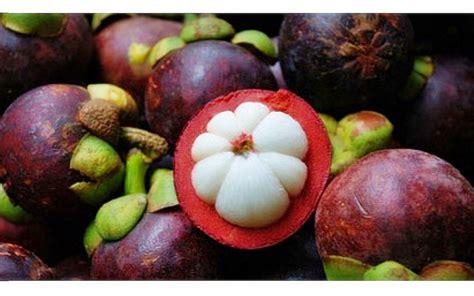 Tanaman Manggis Pohon Manggis 085894576246 budidaya buah manggis budidayaku
