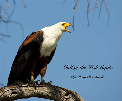 the calling a novel the inn at eagle hill books call of the fish eagle by doug breakwell travel blurb