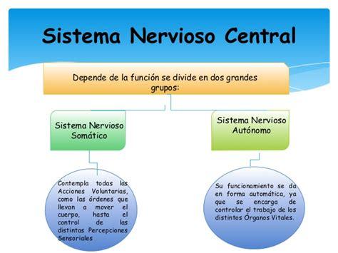 mapa conceptual del sistema nervioso sistema nervioso central