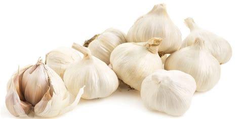 cara membuat bawang putih sebagai obat telinga