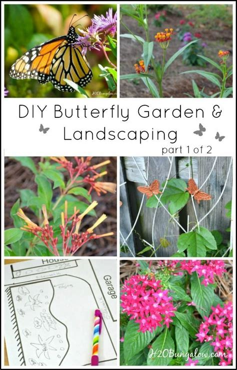 12 Best Deciduous Conifers Images On Pinterest Dwarf Butterfly Garden Layout
