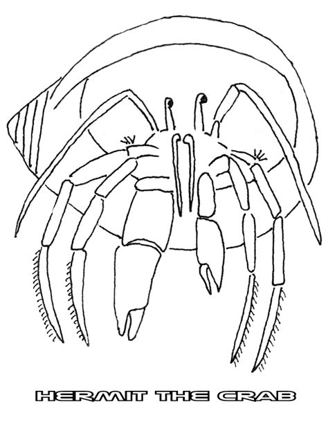 easy crab coloring page absent minded professor clipart