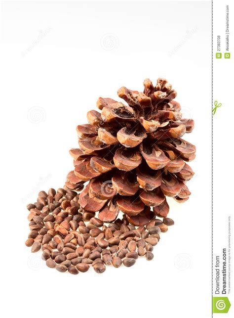 Brown By Dreamcone Soflens brown pine cone with nuts stock photo image 27383708