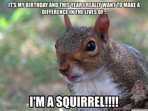 Squirrel Meme - squirrel