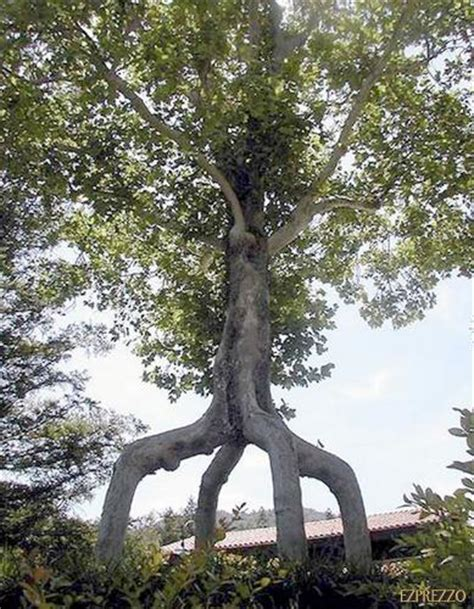 amazing tree amazing things in world weird trees from around the world