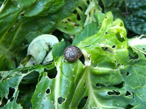 koffiedik tuin koffiedik vriend in de tuin en op je huid roos goes green
