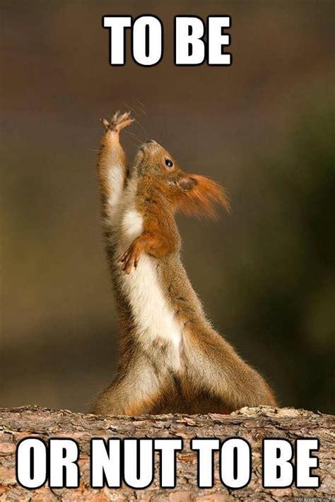 Squirrel Nuts Meme - best 25 squirrel memes ideas on pinterest best squirrel