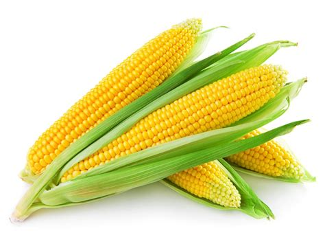 what is a corn corn