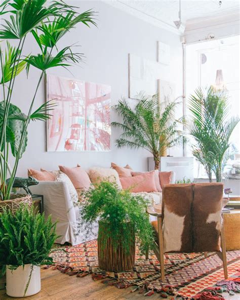 Living Room Plants Walmart The Rise Of The House Plant With Jungle