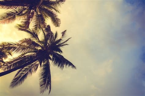 palm trees background palm trees at sunset with clouds background photo free