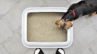 how to litter box a how to litter box a angies list