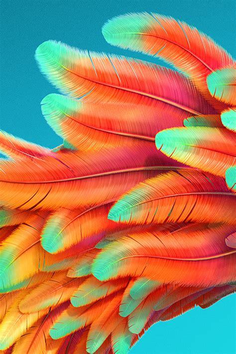 vz bird color rainbow red pattern background wallpaper
