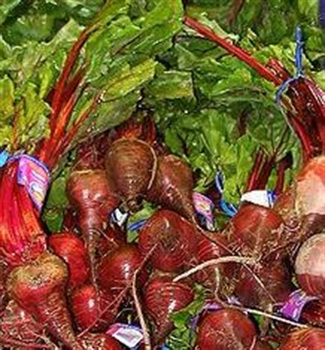 Can Beetroot Make Your Stools by Piles Treatment At Home Makehemorrhoidsgoaway