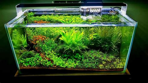 Setup Aquascape by Aquascaping For Beginners Step By Step Guide Expert