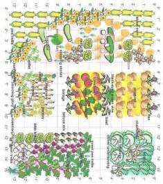 Companion Vegetable Garden Layout 25 Best Ideas About Companion Planting On Companion Gardening Insect Repellent