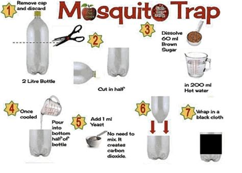 mosquito trap shelly skellenger bedroom around the