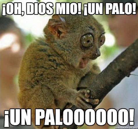 im 193 genes de monos chistosos con frases memes de monos graciosos para whatsapp fondos