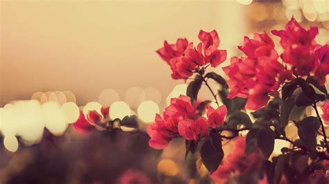 Photographic Florals by 35 Vintage Photography Wallpapers Desktop Freecreatives
