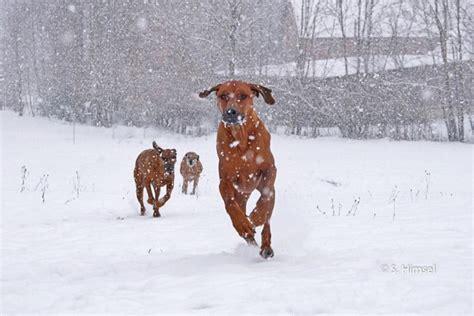 Wie Setzt Sich Auf Ein Bidet by Galoppieren Statt Spazieren Wissen Hund De