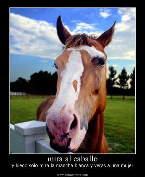 imagenes romanticas con caballos mira al caballo desmotivate com frases y pensamientos