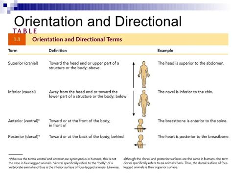 Orientation Direction Planes And Sections orientation direction planes and sections a p human