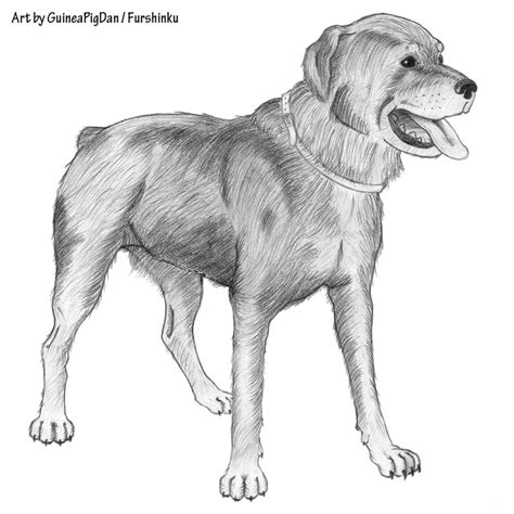 how to cut rottweiler the gallery for gt rottweiler drawing