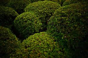 hills of bushes by henrikholmberg on deviantart