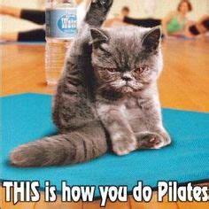 Cat Gym Meme - memes im going to make on pinterest cheat meal