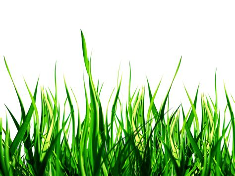 green grass clipart field of green grass clipart