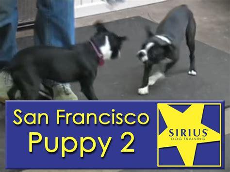sirius puppy sirius puppy class sf p2 and educational