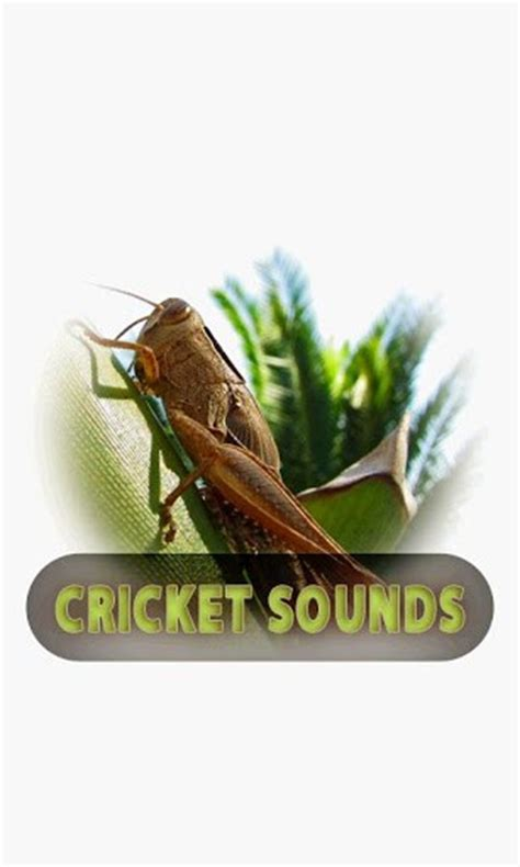 Home Design Quick Easy 2 0 Free Download by Download Cricket Sounds For Android By Photobeat Appszoom
