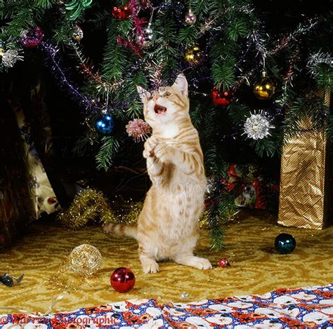 funny photos of cat and christmas tree design swan