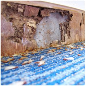 termites    home massey services
