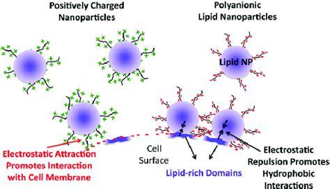schematic representation   electrostatic repulsive